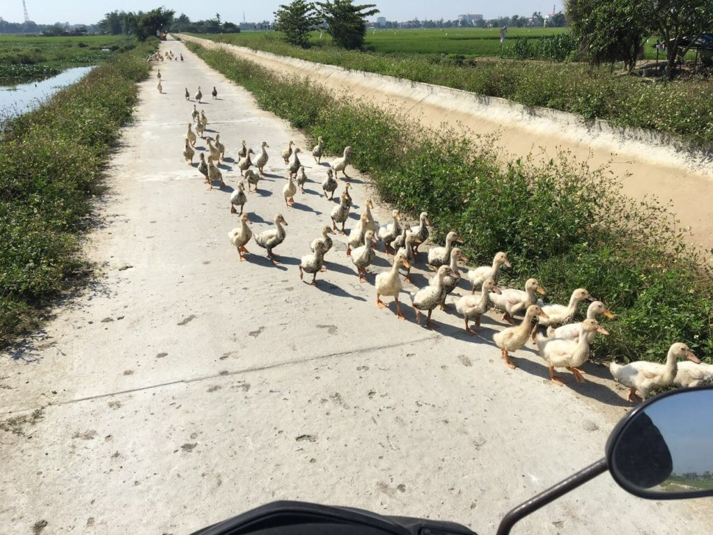 Rush Hour in Hoi An